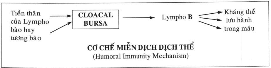 Miễn dịch học bệnh phong